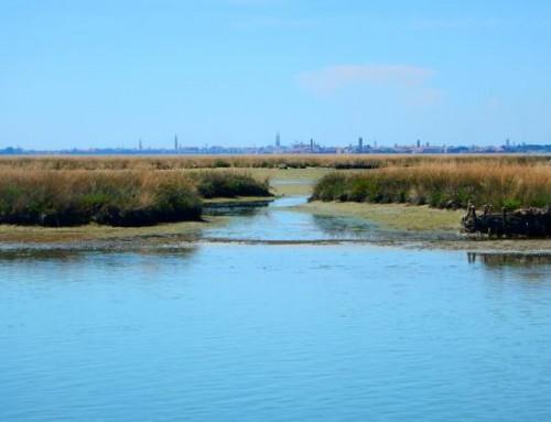Le barene della Laguna di Venezia