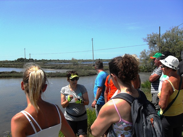 speigazione della guida e birdwatching in laguna di Venezia